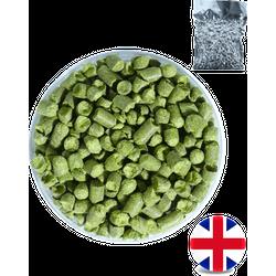 Hop om bier te brouwen - Challenger Hop pellets- oogst 2020